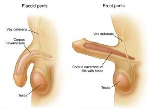impotencija erektilna disfunkcija